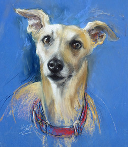 6 Whippet on Blue for TNPS website