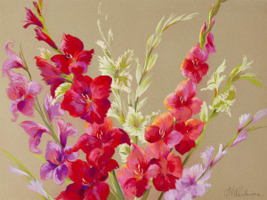 N2298 Glorious Gladioli